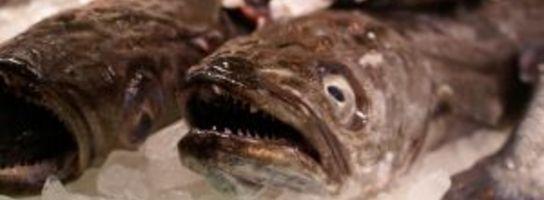 """Jedzmy ryby (a zwłaszcza dorsze...), czyli gdyńska impreza """"Dary Morza"""""""