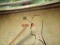 nerw łączący oko z dupą